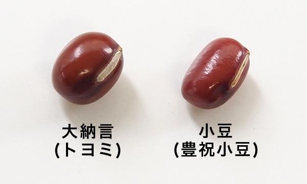大納言(トヨミ)と小豆(豊祝小豆)