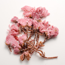 桜の花 塩漬け画像