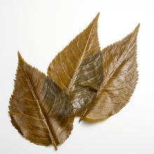 桜の葉 塩漬け画像